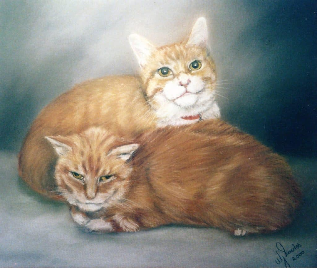 Portraits of two red cats