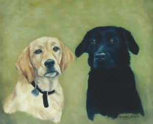 Golden retriever and black Labrador Dog portraits