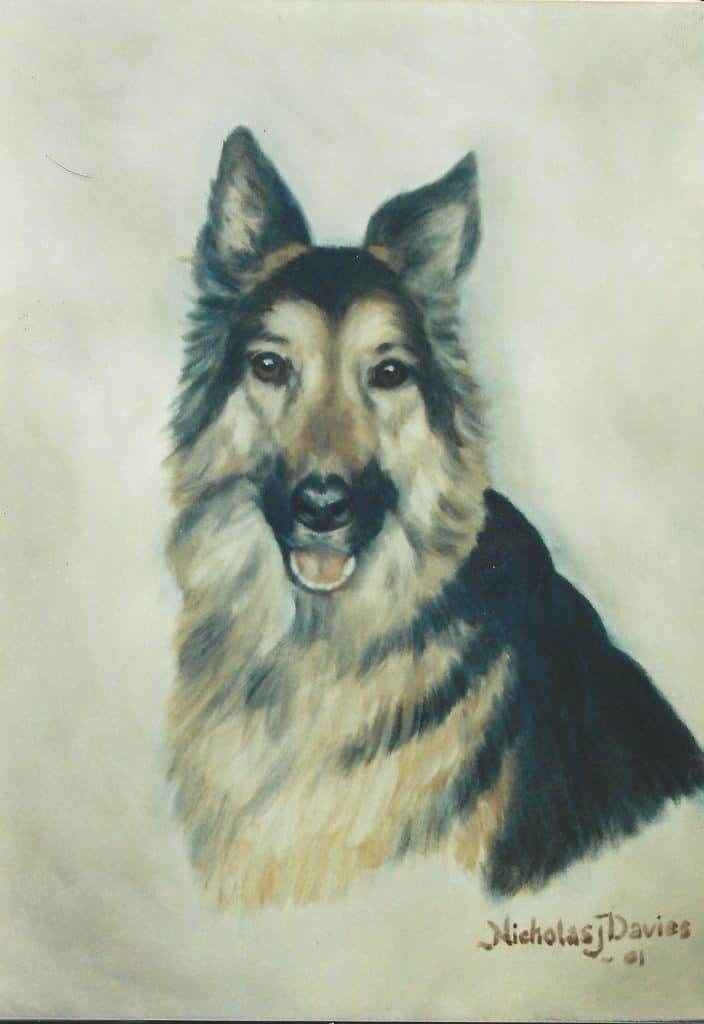 German Shepherd Portrait by Nick Davies